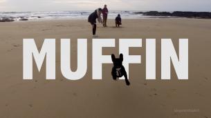 Petite ballade hivernale sur la côte, l'occasion pour Muffin de se détendre les guiboles.